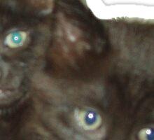 Two Kittens Sticker
