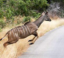 kudu leap by gruntpig
