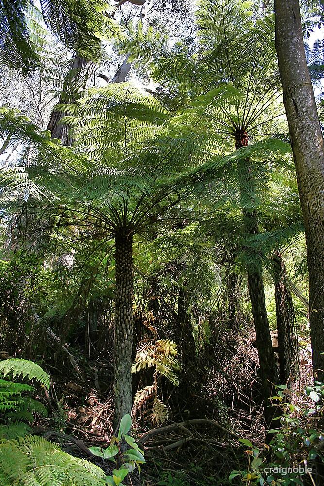 Wadbilliga Tree Ferns by craignoble