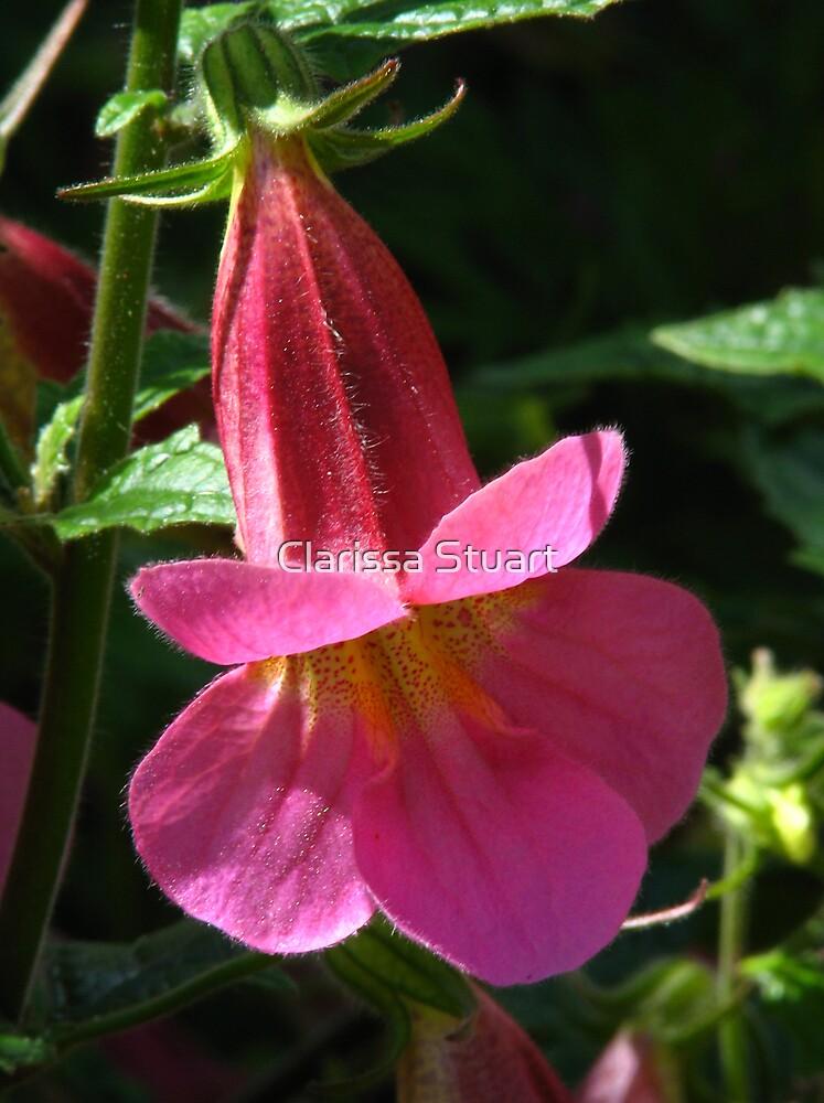 Penstemon Flower by Clarissa Stuart