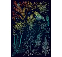 wild forest things Photographic Print