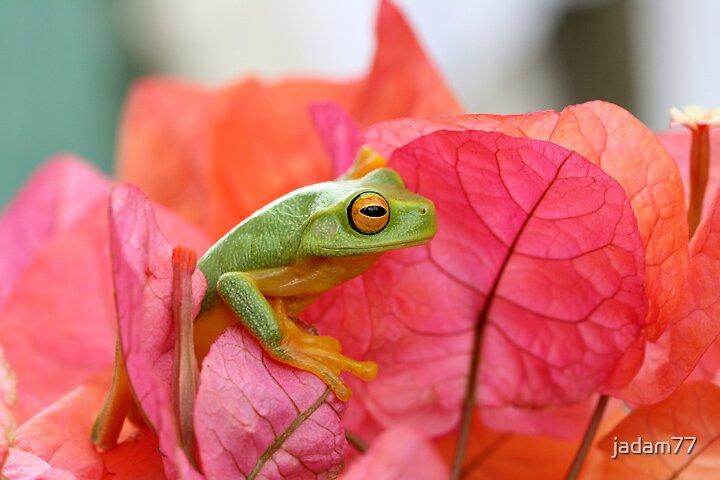 Green Tree Frog in Bouganvillea by jadam77