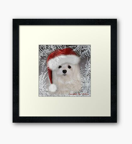 Snowdrop the Maltese - A Frosty Morning ! Framed Print