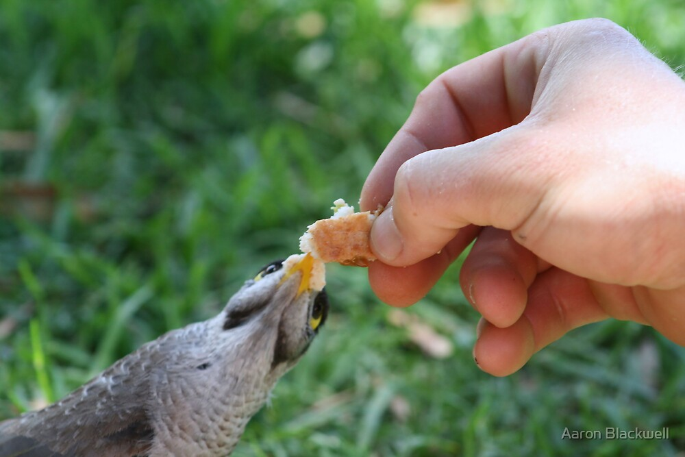 Friendly Bird by Aaron Blackwell
