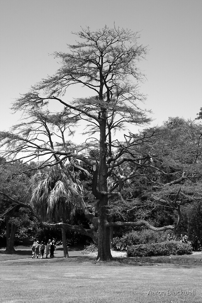Tree in the park by Aaron Blackwell