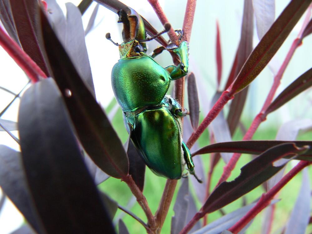 Decembers Beetle 1 by PuckMorrow