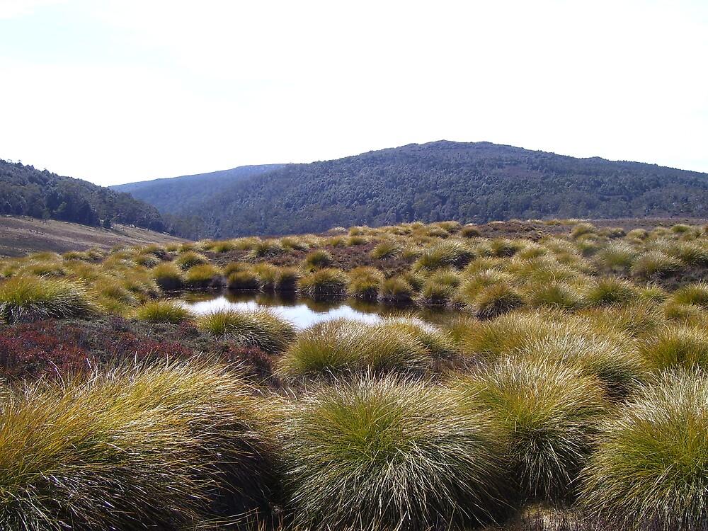 near Ronny's Creek, Cradle Mt area -  by gaylene