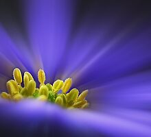 Shades of Blue by John Edwards