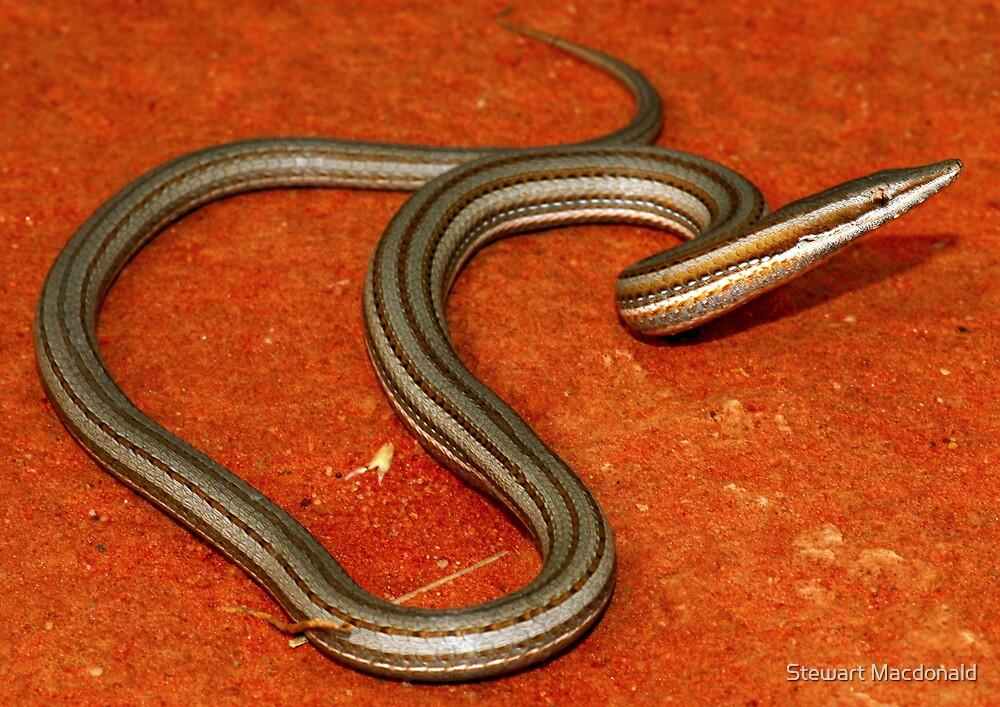 Burton's legless lizard by Stewart Macdonald