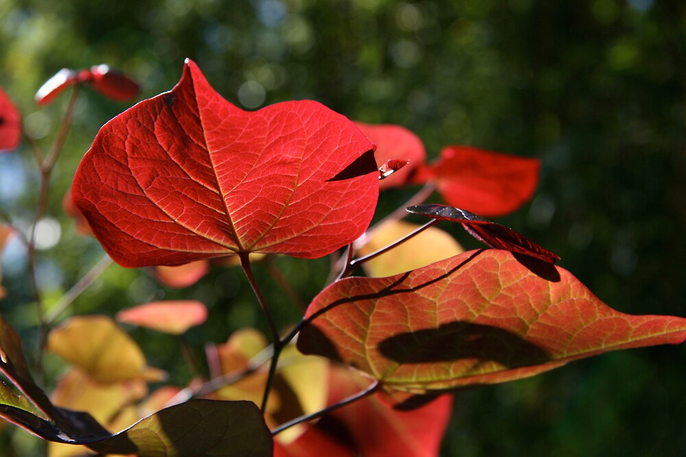 Red Leaves by HeidiD