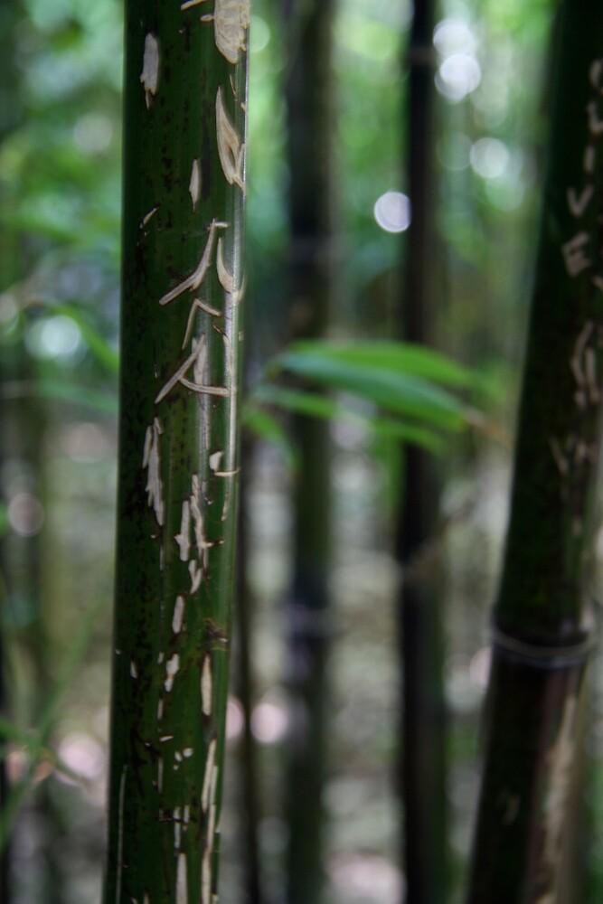 Bamboo graffiti by HeidiD
