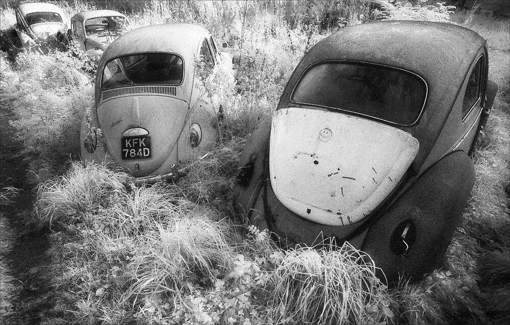 Beetle Graveyard by Hywel Harris