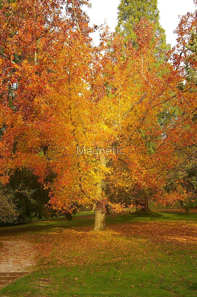 Yellow Tree by Magnetic