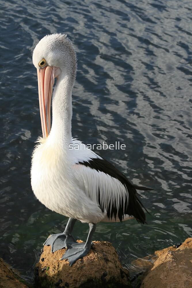 Pelican Preen by saharabelle