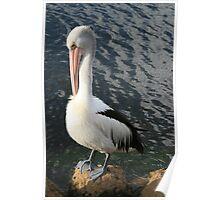 Pelican Preen Poster