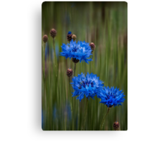Old-fashioned blues Canvas Print