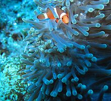 Cape Buse Clown by Michael Powell