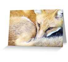 Resting Red Fox Greeting Card
