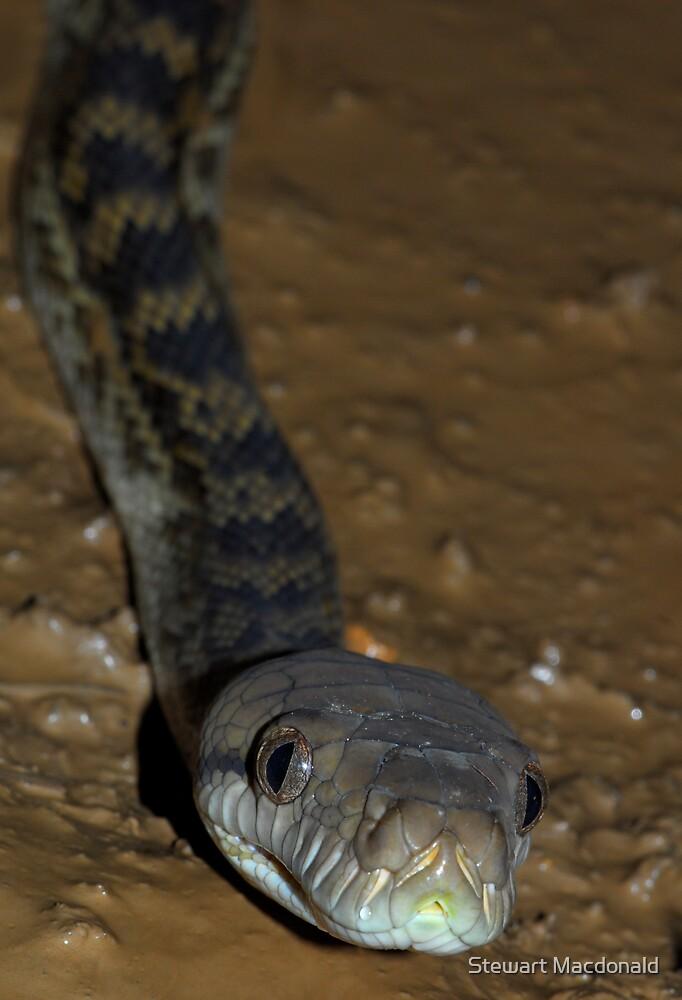 Scrub python by Stewart Macdonald