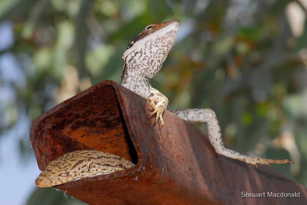 Lounge lizards by Stewart Macdonald