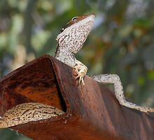 Lounge lizards by Stewart Macdonald