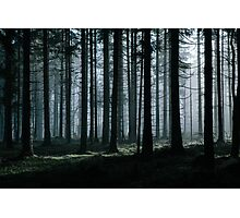 Mystery forest Photographic Print