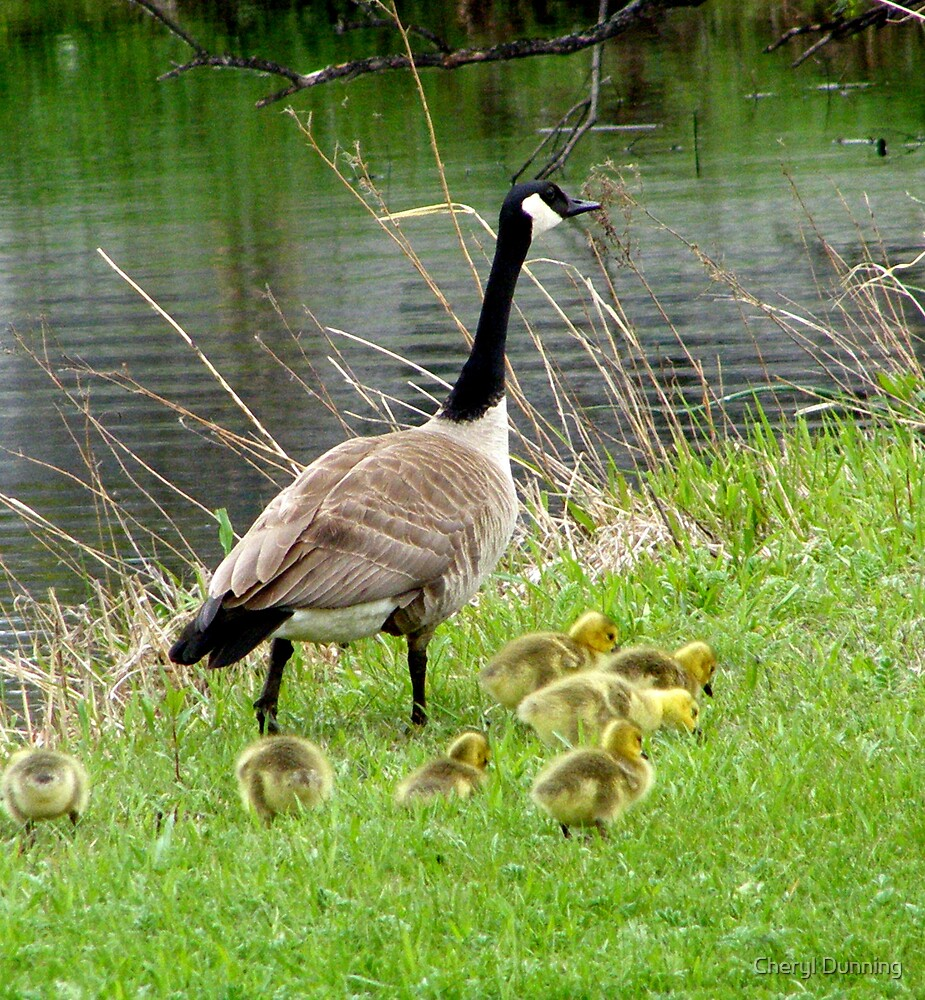 family outing by Cheryl Dunning
