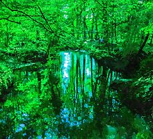 Glade by ncp-photography