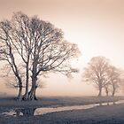 Tywi valley Trees 1 by Hywel Harris