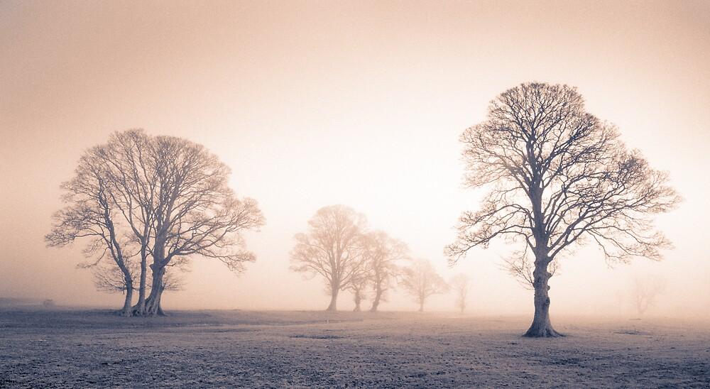 Tywi Valley Trees 2 by Hywel Harris