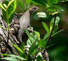 Lizard by Stephen Heliczer