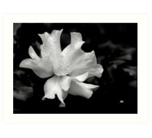 camellia in BW_3 Art Print