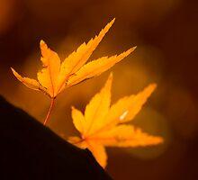 The Last Leaves by David Linkenauger
