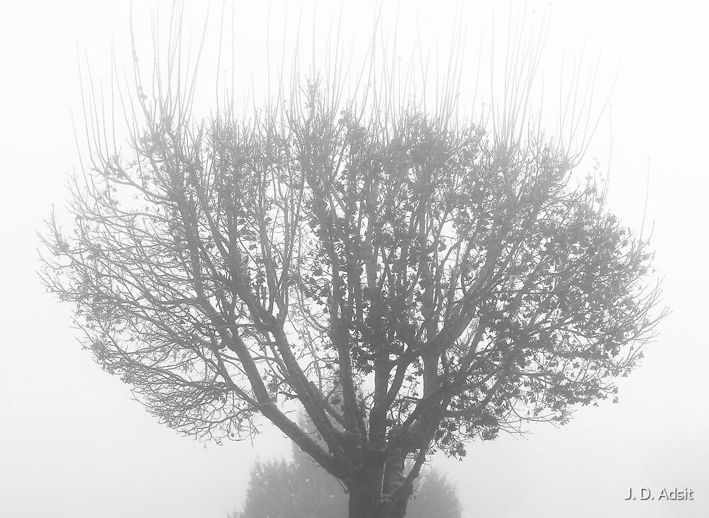 Walking Towards the Light by J. D. Adsit