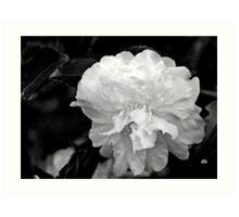 camellia in bw_4 Art Print