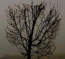 Fog Lifting by J. D. Adsit