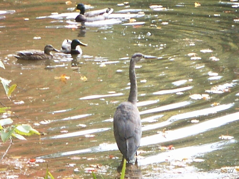 Blue Heron with Friends by betsy8897
