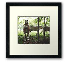 Gorgeous horses Framed Print