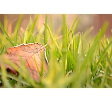 Fallen Leaf in Natural Grass Left Photographic Print