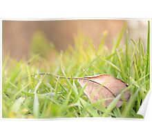 Fallen Leaf in Natural Grass Right Poster