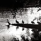 Ducks in a Row by © Joe  Beasley IPA