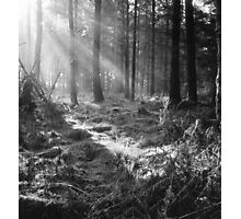 Sunlight through Trees Photographic Print
