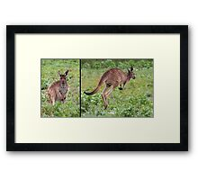 "Western Grey Kangaroo ~ ""Hello and Goodbye"" Framed Print"