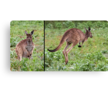 "Western Grey Kangaroo ~ ""Hello and Goodbye"" Canvas Print"