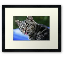HAS THE CAT GOT YOUR TOUNGE Framed Print