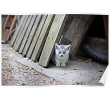 Blue Eyed Kitten Looking Relaxed Poster