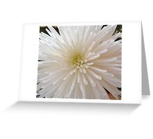 Pure.. Greeting Card