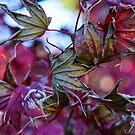 Leaf Weave by Honario