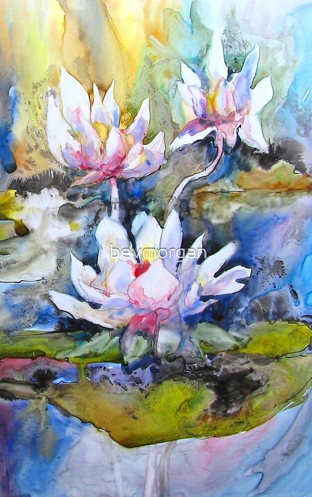 Pond Lilies by bevmorgan