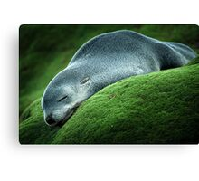 Flat Out Canvas Print